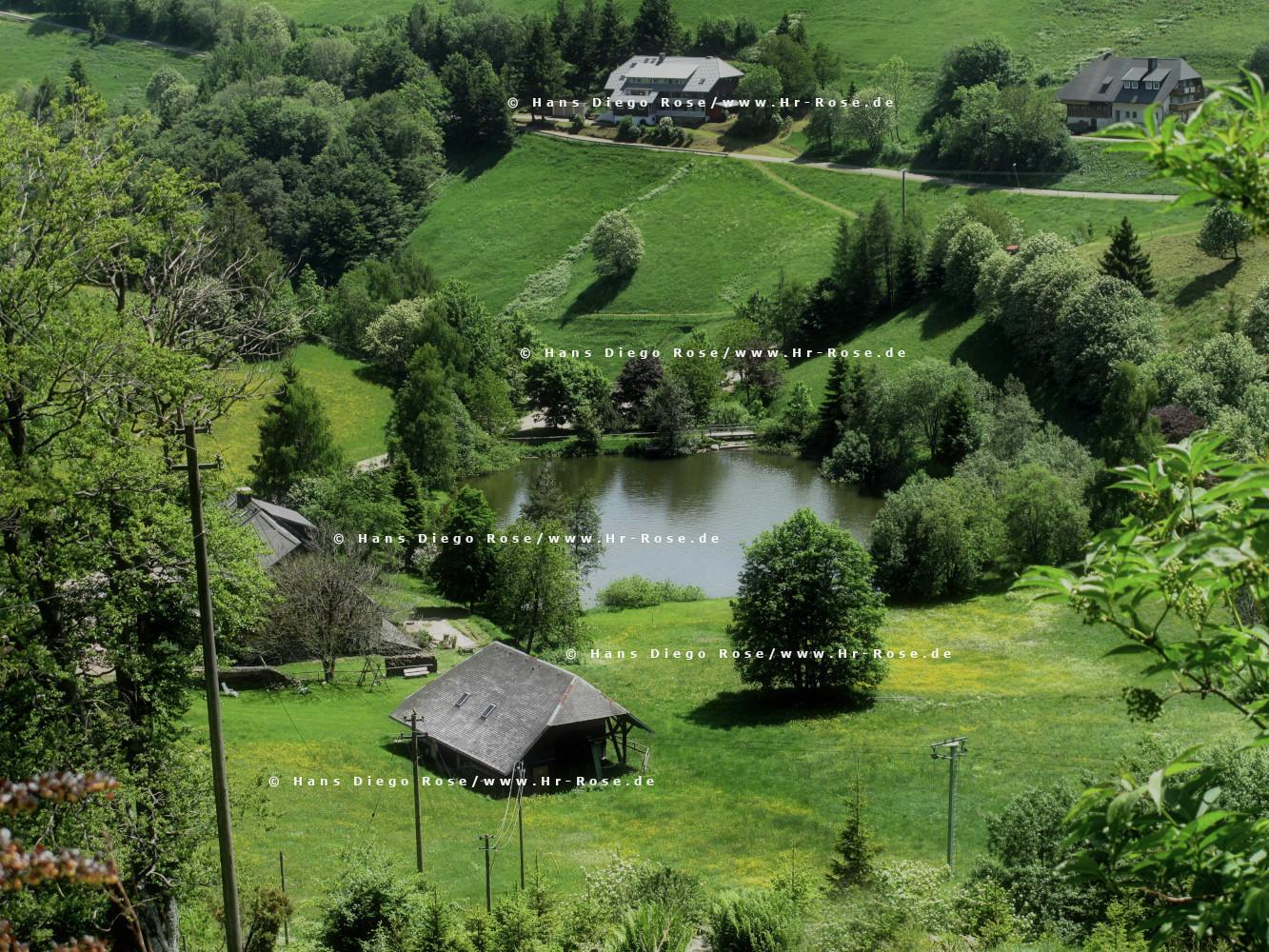 Fotokurse in Spanien, Teneriffa und im Schwarzwald