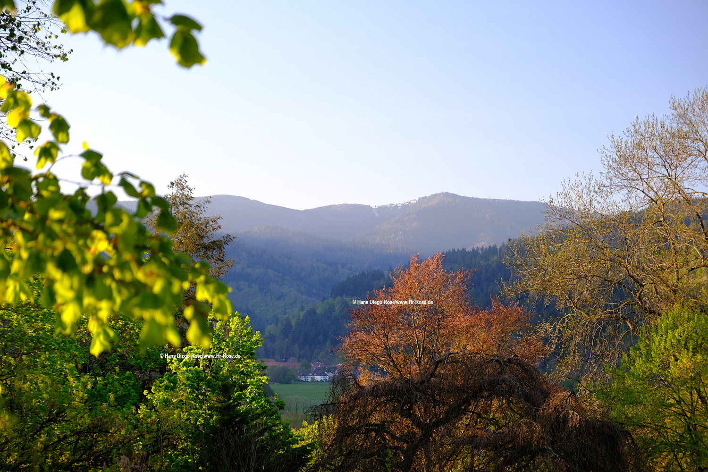 Naturfotografie Fotokurse, Schwarzwald im Frühling
